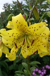Описание цветок жёлтый с коричневым